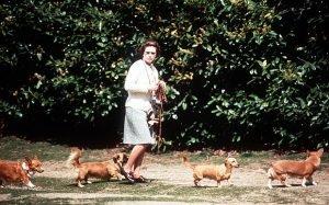Королева Єлизавета ІІ зобразила прогулянку з її собаками у 1973